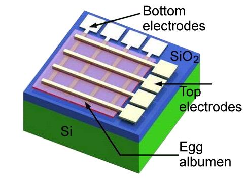 20160502111318_egg-electronics